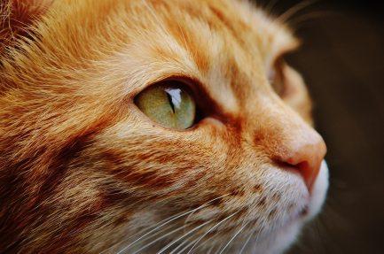 orange-white-cat-115011